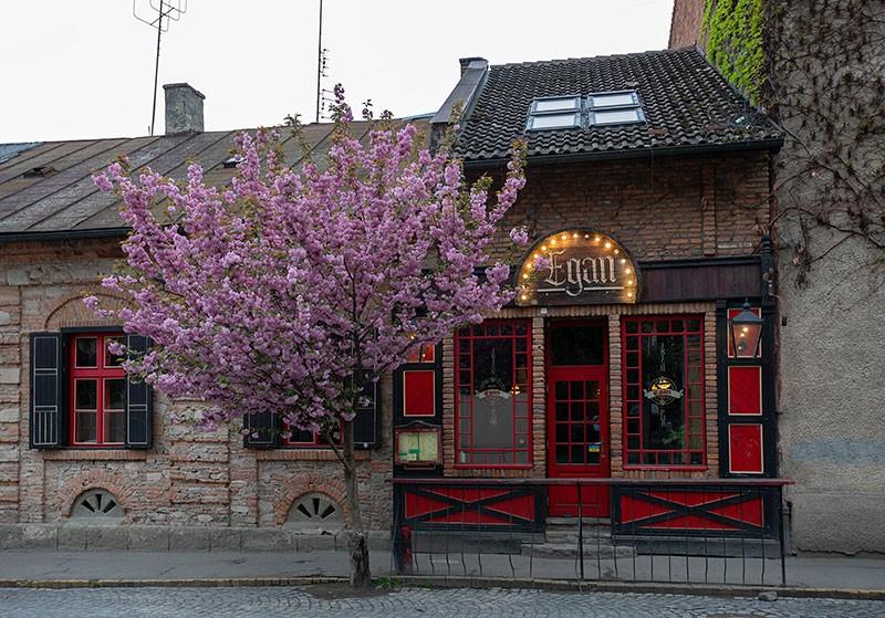 Цвет мая - розовый.